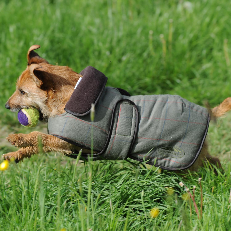 WEATHERBEETA Manteau Couvre-reins Manteau pour chien en tweed/ /TWEED Olive
