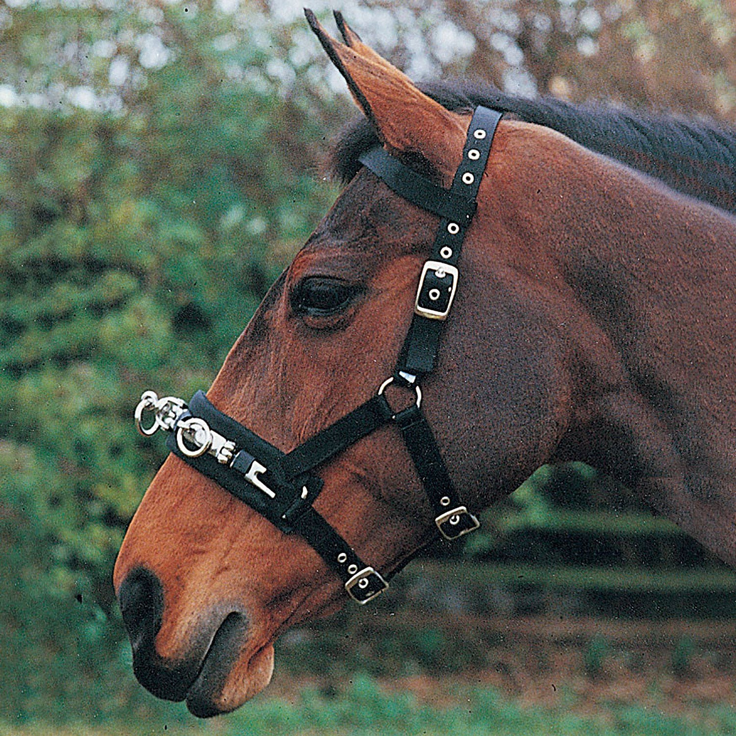 Imperial Riding Ambient Soft Star Lunging Girth Lunge Roller