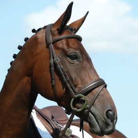Collegiate Syntovia+ Padded Raised Flash Snaffle Bridle - Brown