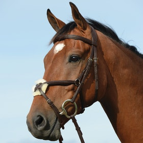 Collegiate Syntovia+ Padded Raised Grackle Bridle - Brown