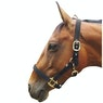 JHL Padded Head Collar