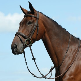Collegiate Syntovia+ Plain Flat Running Martingales - Brown