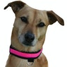 Collier pour chiens Equisafety Flashing