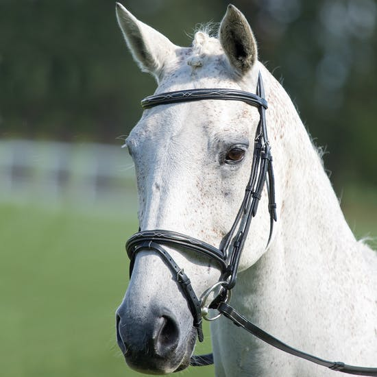 Shires Avignon Raised Flash Snaffle Bridle
