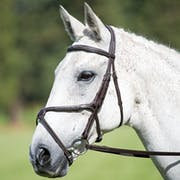Shires Avignon Mexican Grackle Bridle