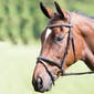 Shires Avignon Raised Flash Snaffle Bridle