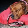 Amigo Colourful Hundeleine