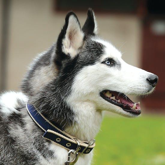 Amigo Colourful Dog Collar