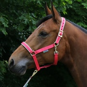 Bucas Dublin Head Collar