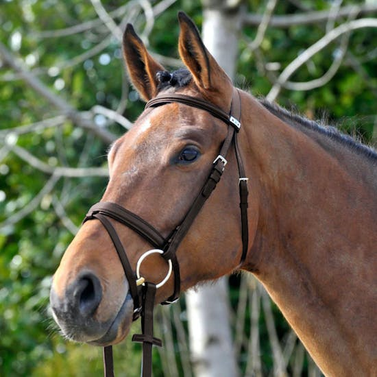 Stubben 1001 Waterford Snaffle Bridle
