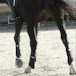 Equilibrium Stretch & Flex Flatwork Exercise Wrap
