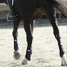 Equilibrium Stretch & Flex Flatwork Exercise Wrap