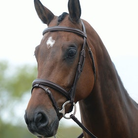 Kincade Flash Snaffle Bridle - Brown
