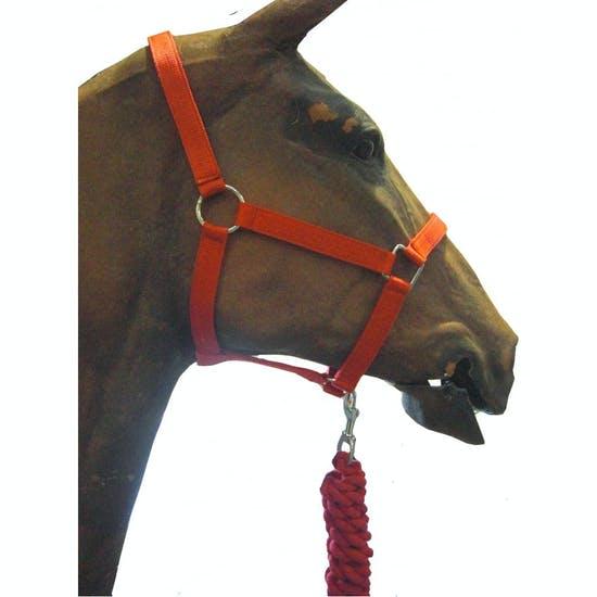 Sogas Roma Set of Headcollar and