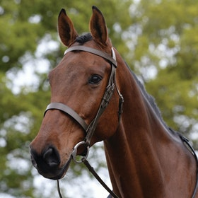 Kincade Hunt Cavesson Snaffle Bridle - Brown