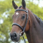 Kincade Raised Cavesson Snaffle Bridle