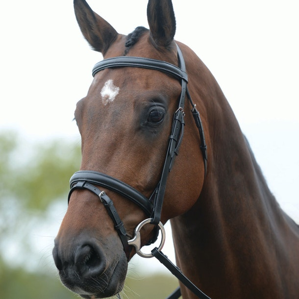 Kincade Flash Snaffle Bridle