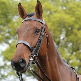 Kincade Show Weymouth Bridle - Black