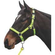 Longe Mark Todd Deluxe Padded Headcollar and