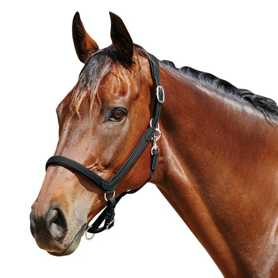 Collegiate ComFiTec Head Collar