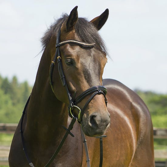 QHP Amor Snaffle Bridle