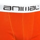 Animal Block Boxer Shorts