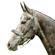 John Whitaker Leather Breeder Head Collar