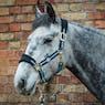 Derby House Pro Fleece Head Collar
