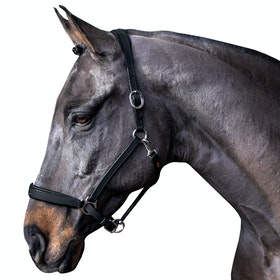 John Whitaker Ready to Ride Head Collar - Black